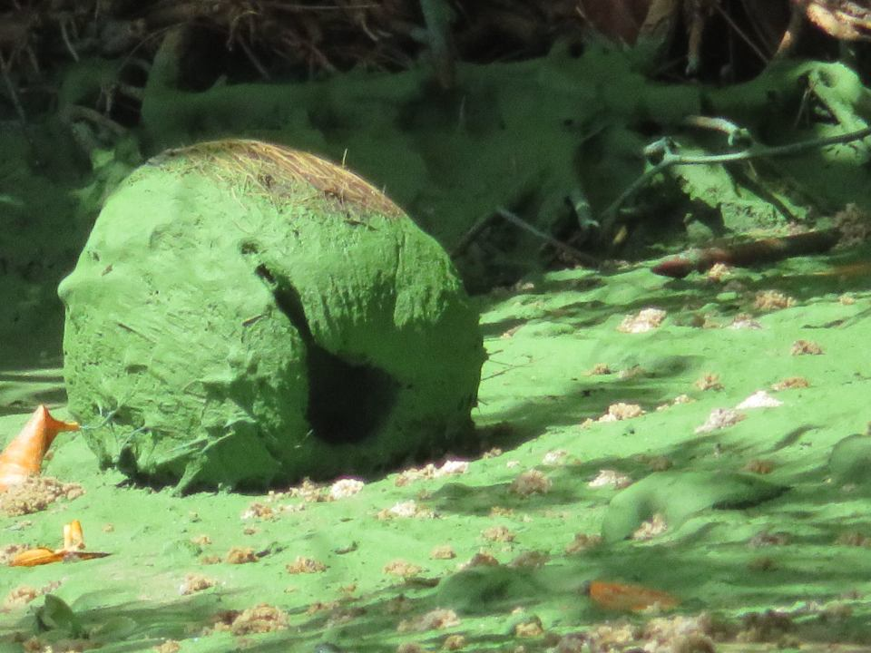 DOH Martin reminds residents and visitors to avoid contact with algae