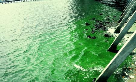 SBA offering low-interest loans to businesses affected by toxic algae bloom
