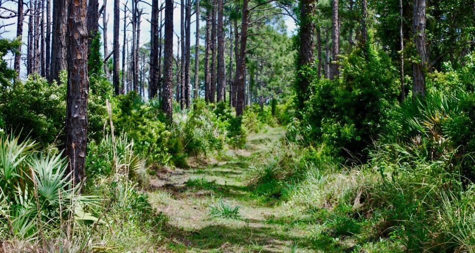 Savannah Preserve State Park