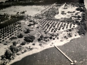 """Photo of Mt Pisgah area in 1957 featuring the Langford Estate. the Dommerich's property can be seen in the upper right corner where the vegetation has not been cleared for orange groves. (Photo from """"Sewall's Point"""" a History of a Peninsular Community of Florida's Treasure Coast written by Sandra Henderson Thurlow.)"""