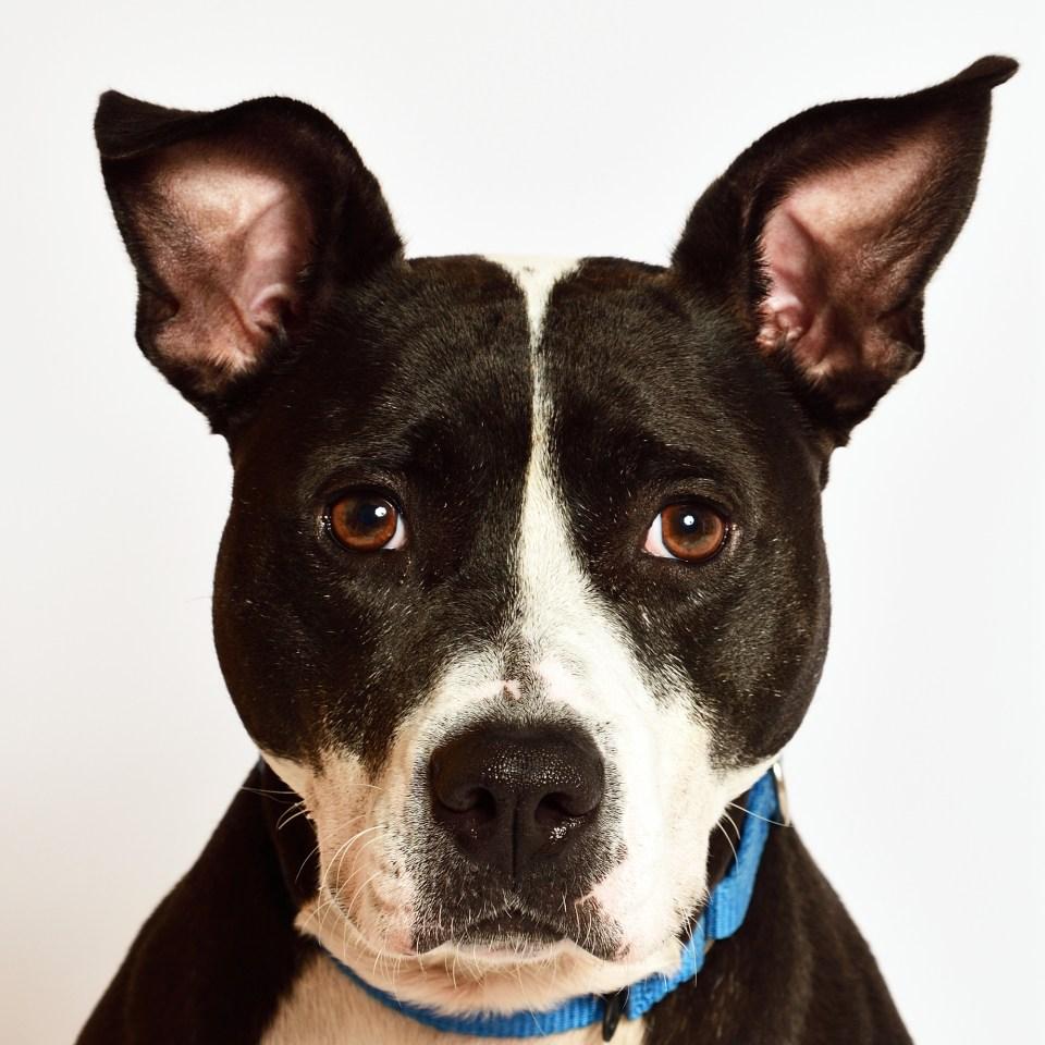 Adopt Pepper! Pet of the week!