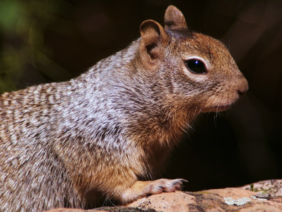 Elderly woman attacked while feeding squirrels in Port St Lucie