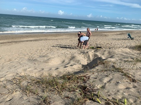 First leatherback sea turtle nest of 2020 found in Martin County