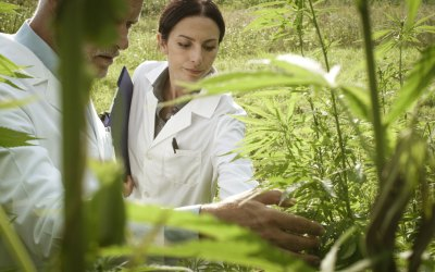 CBD For Asthma Research – What The Studies On Pubmed Say