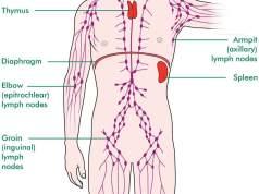 Lymph node locations