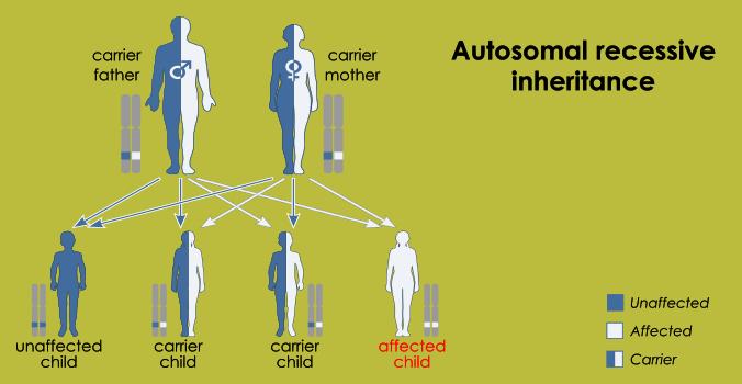 How is SMA inherited? – TreatSMA