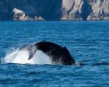 A picture of a whale