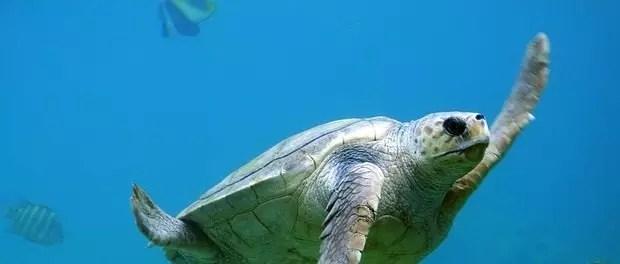 turtle by unsplash
