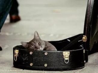 busking cat