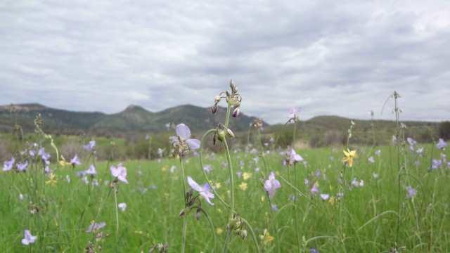 Sky Island Alliance | Flower field