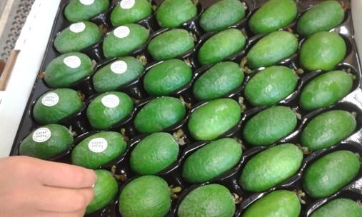 Pinewater Organic Feijoas