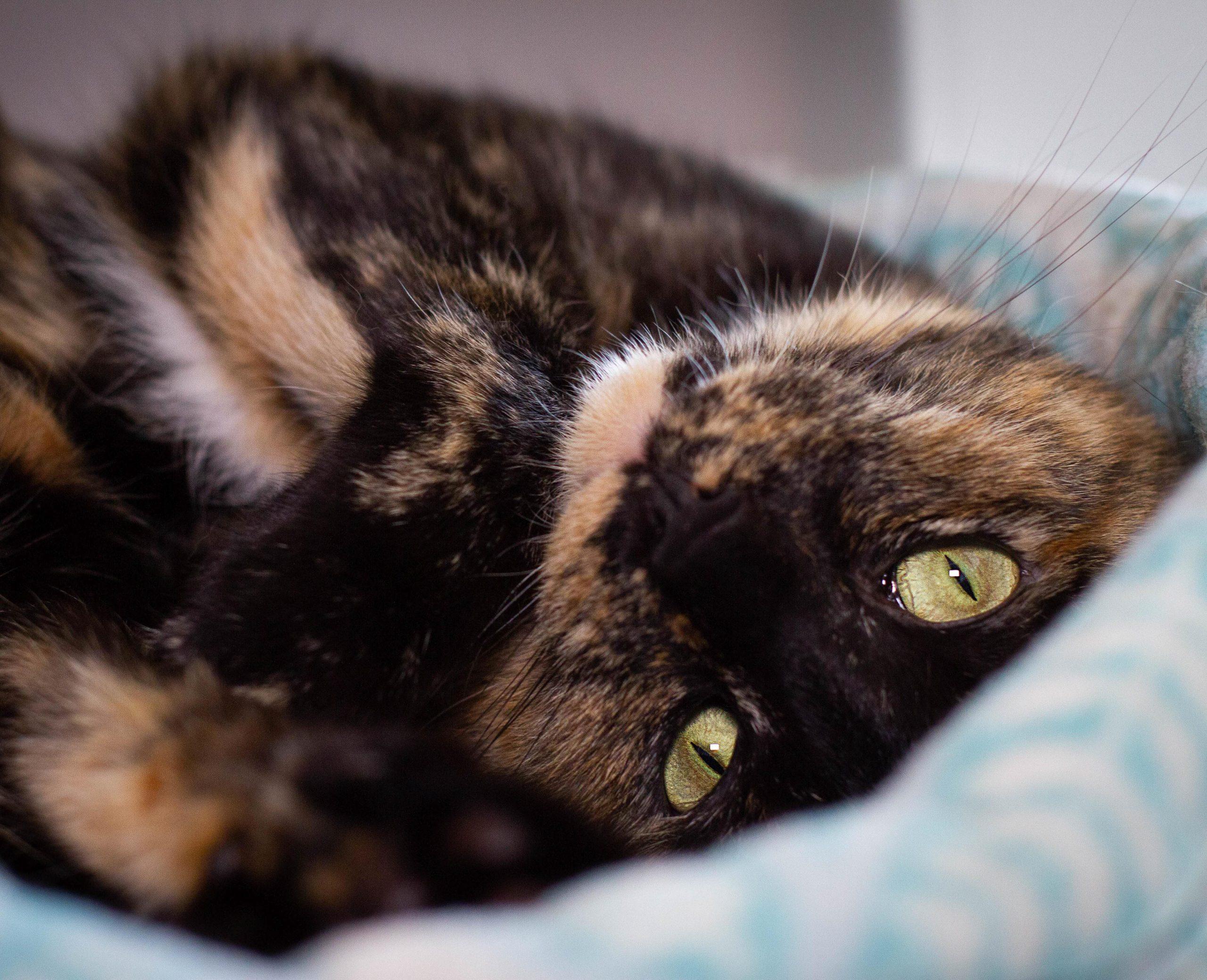 Cat Behavior Tree House Humane Society