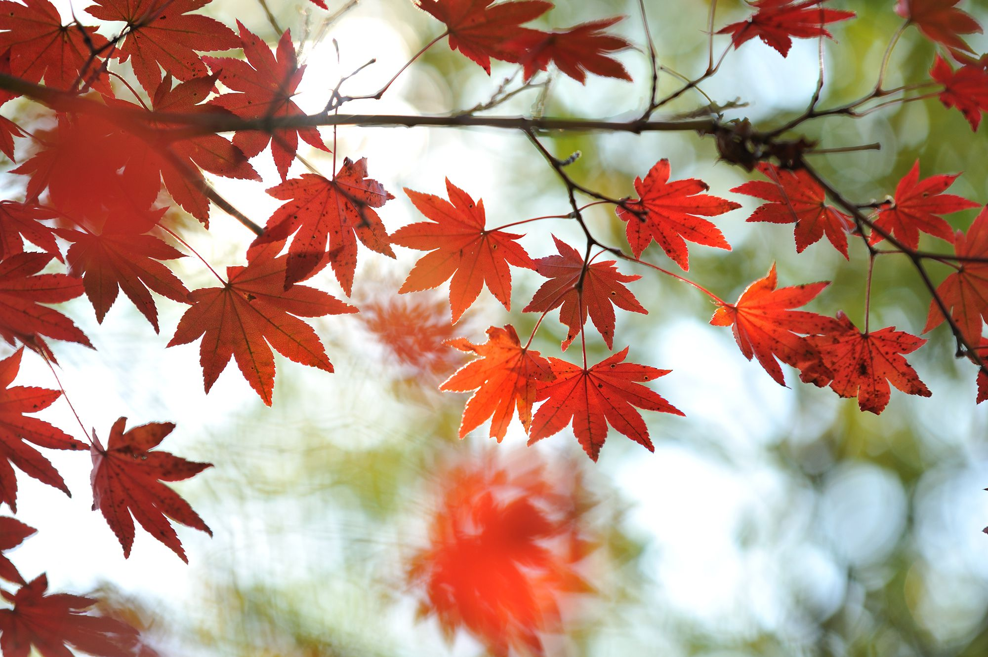 Why Do Leaves Change Color In Autumn