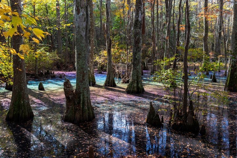 Why These Rainbow Swamps Have Candy-Colored Hues