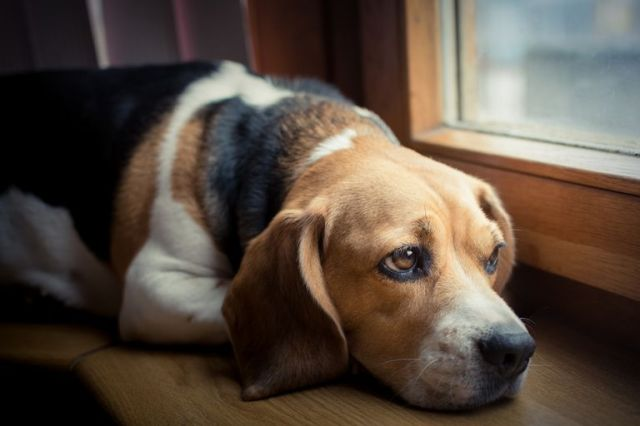 Is My Dog Depressed? The Warning Signs and Solutions