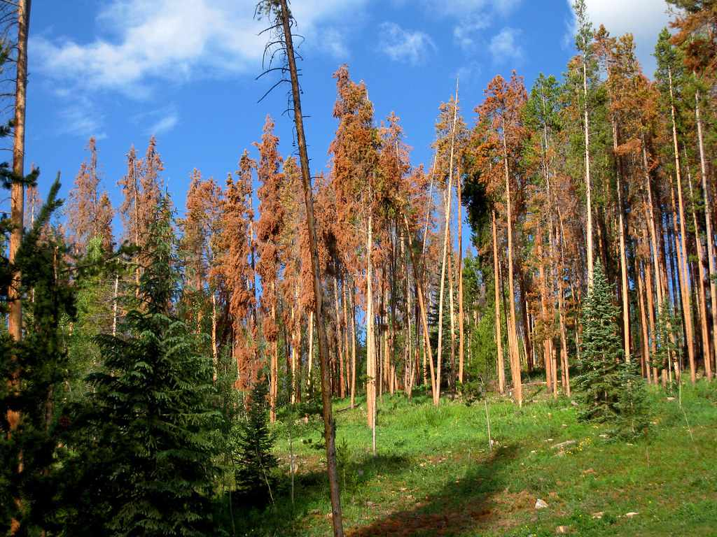 Because of the snow melting and little evaporation, the ground stays very moist for the growing season. 30 Fascinating Facts About The Boreal Forest