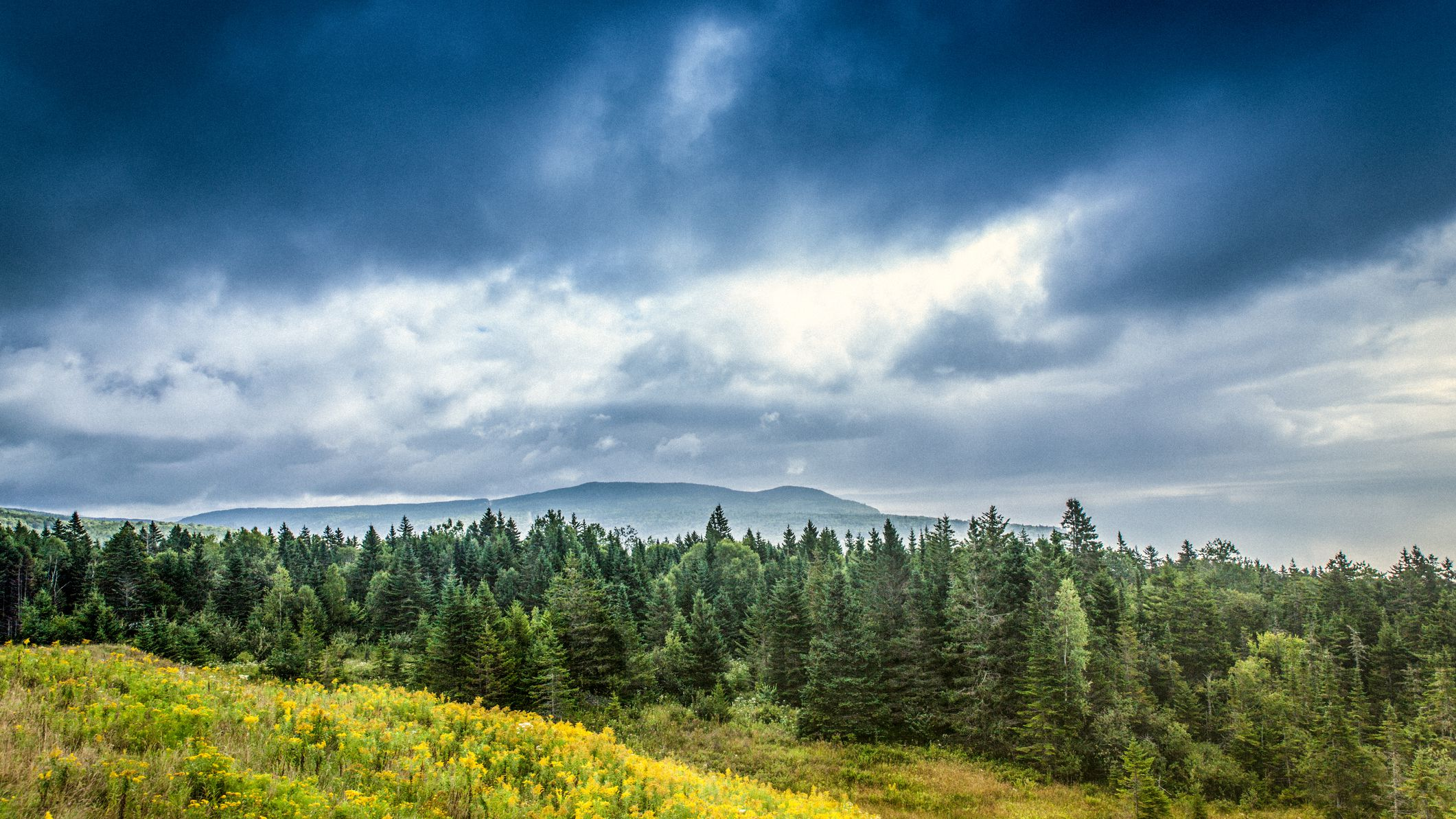 These factors can include soil acidity, light, radiation. 30 Fascinating Facts About The Boreal Forest