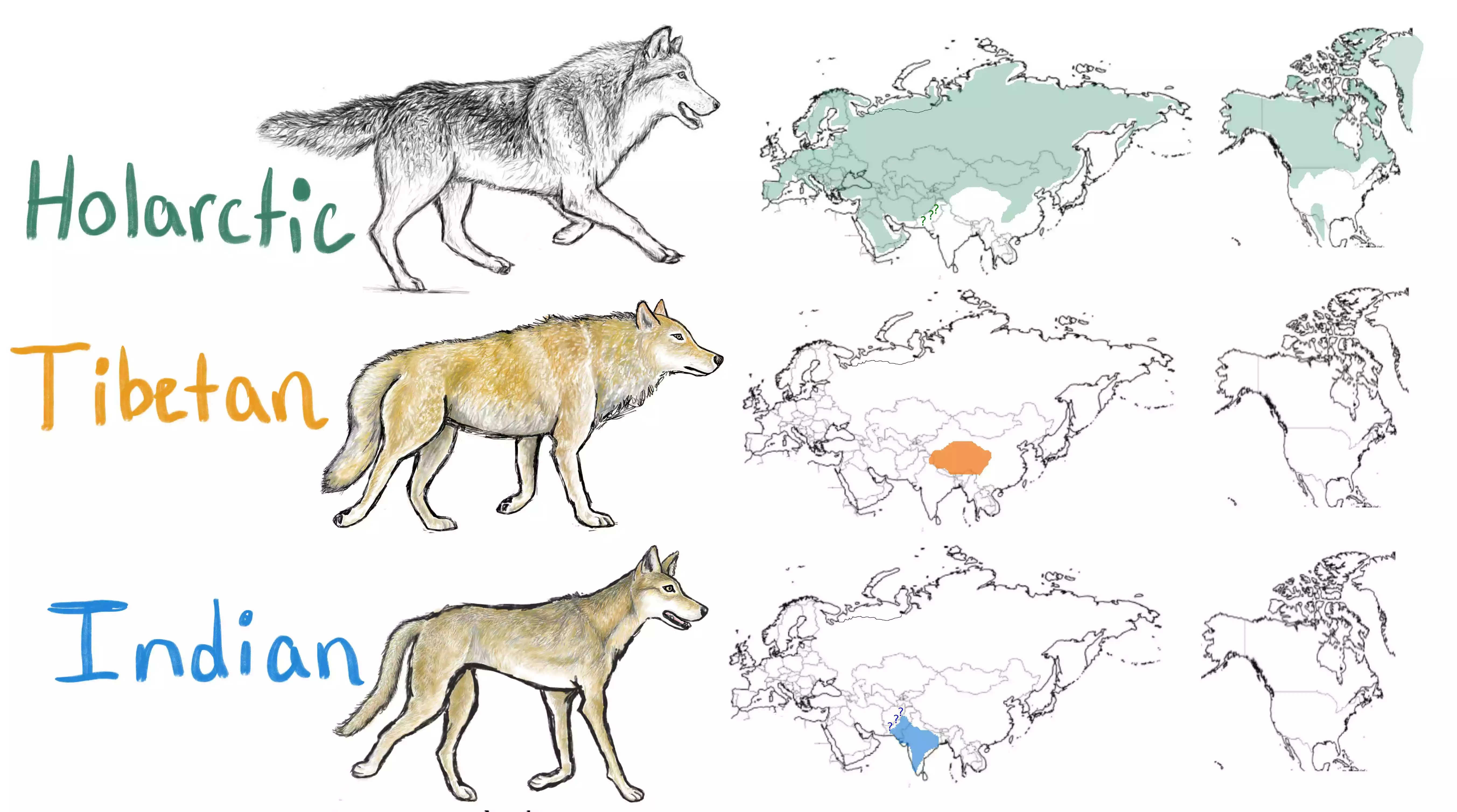 gray wolf distribution