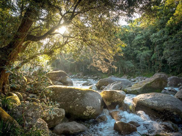 Mossman Gorge Rainforest Discovery