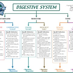 Digestive System Flow Chart Diagram Gibson Guitar Wiring Biological Terrain For The