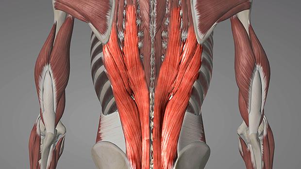 Suorat selkälihakset