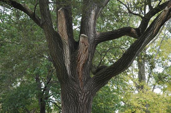 piper perabo gallery elm tree house