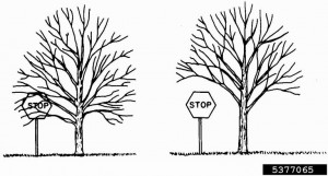 Tree Trimming & Pruning Guide: Tips, Techniques For