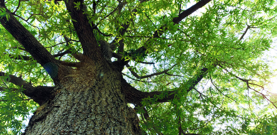 Tree Resolutions