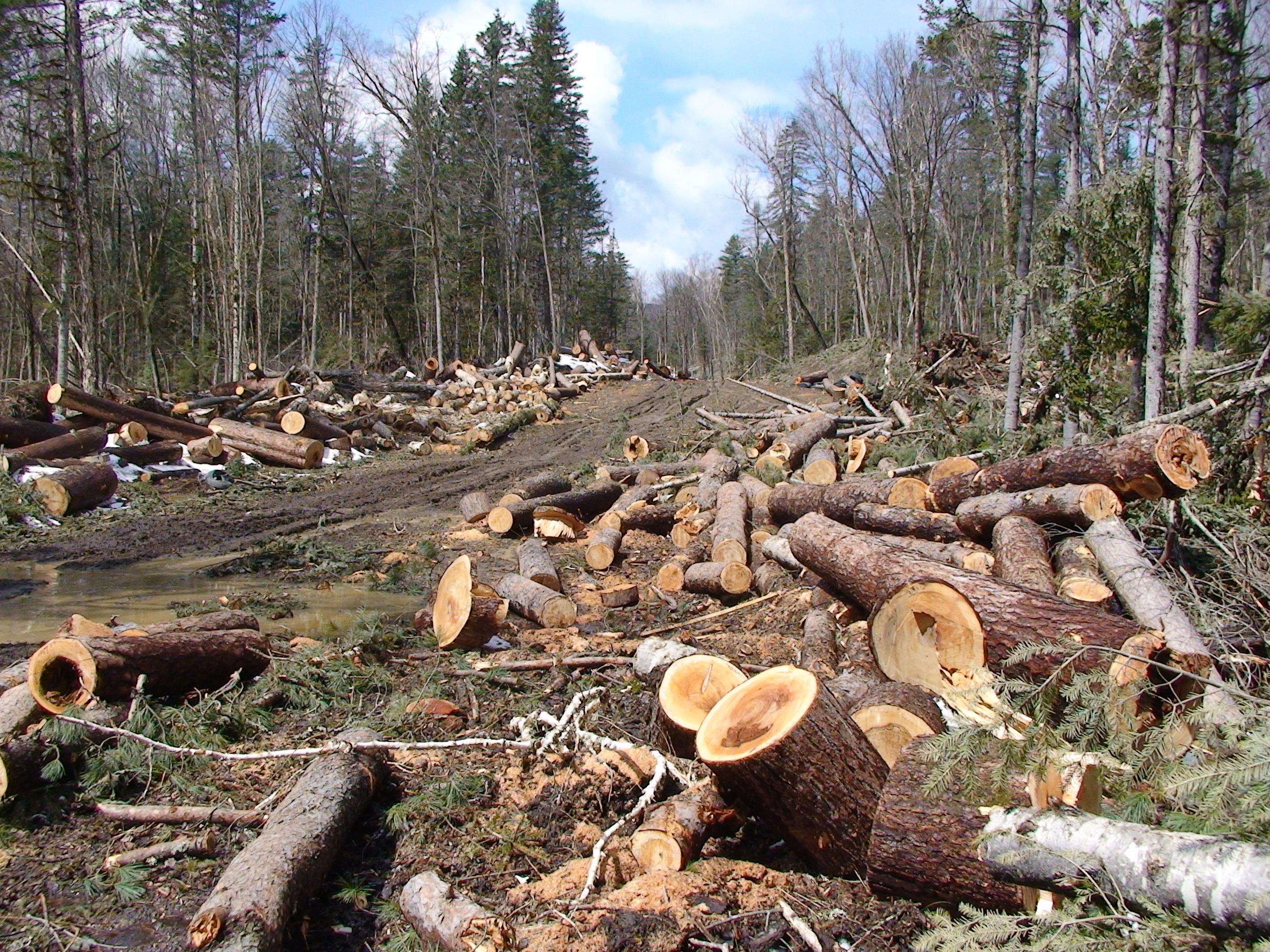 Walnut Tree Wood Value