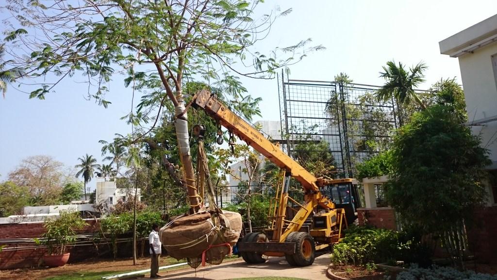 Tree transplant India