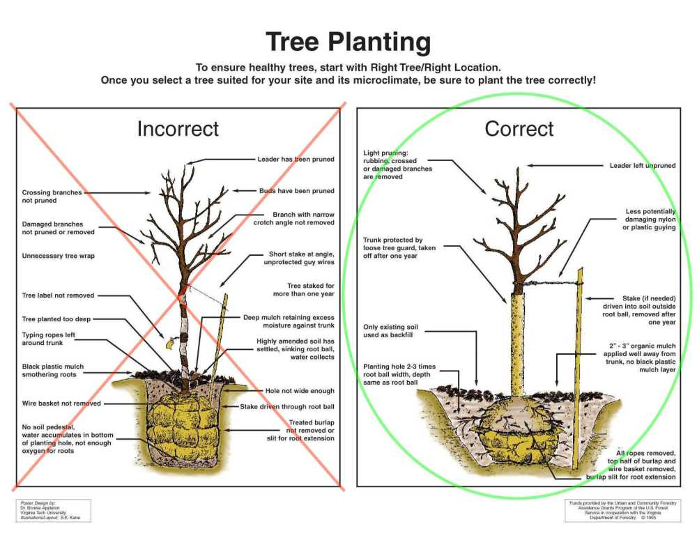 medium resolution of new tree planting care