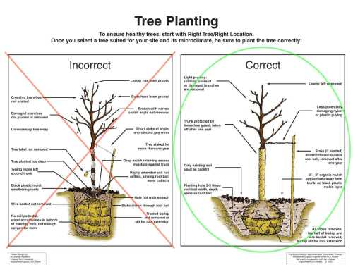 small resolution of new tree planting care