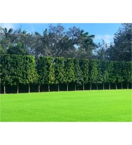 pruning practices bayrum hedge global warming