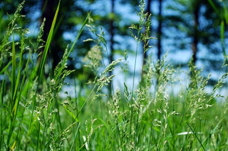 Controlling Weeds Organically