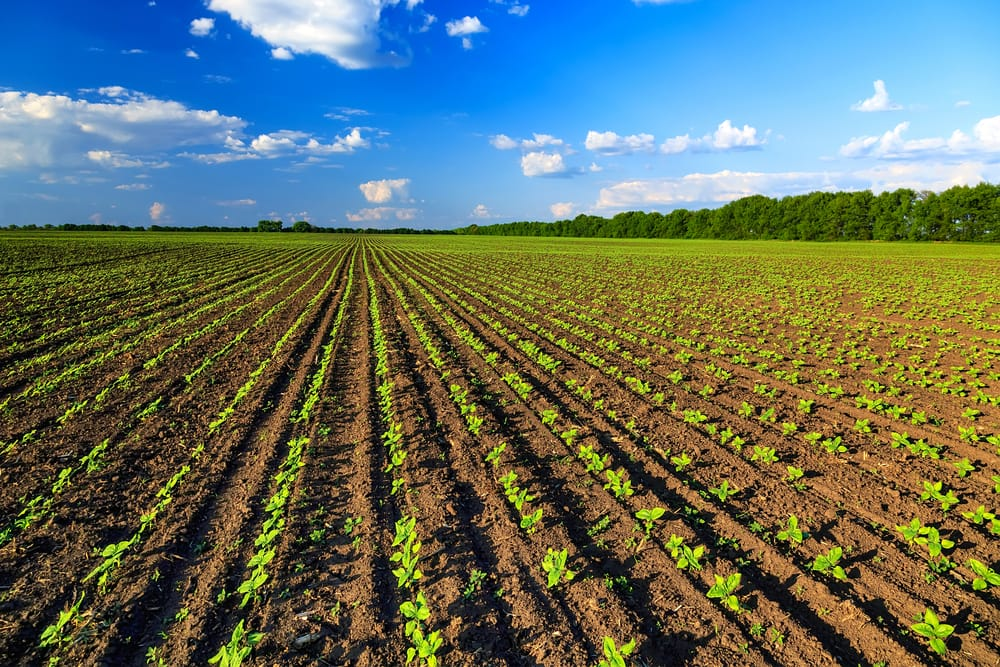 Coronavirus, la vendita del biologico cresce di più del cibo da agricoltura convenzionale