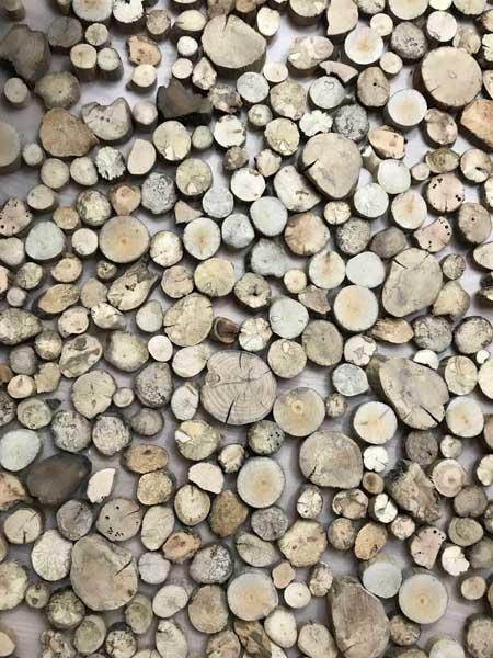 Treibholz Holzscheiben ausgelegt