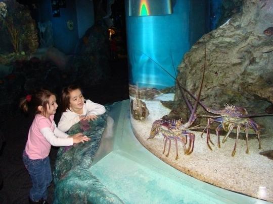 Adventure Aquarium  Camden NJ  Kid friendly activity