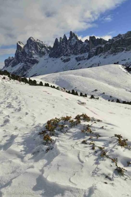 Rasciesa, Vista sulle Odle, Fermede e Sass Rigais, Val Gardena, Naturpark Puez-Geisler, Alto Adige