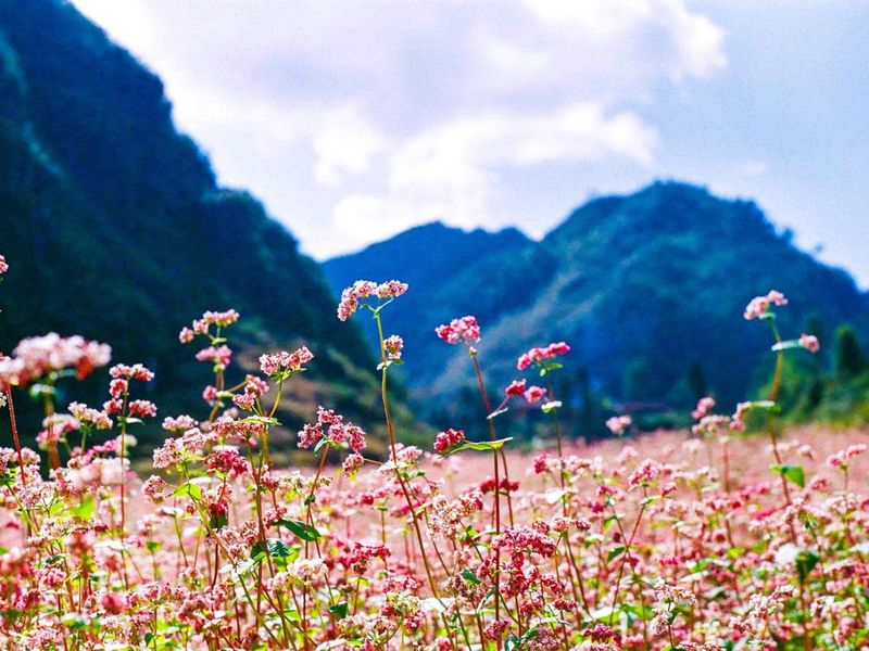 The reasons why you should travel in Ha Giang