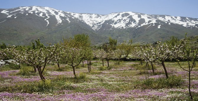 Image result for lebanon mountains