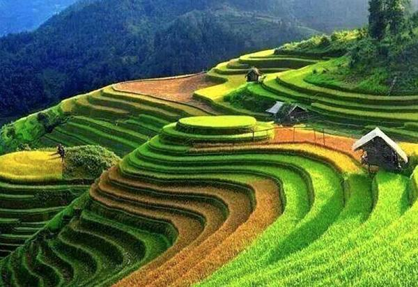 The endless terrace fields - Sapa tours