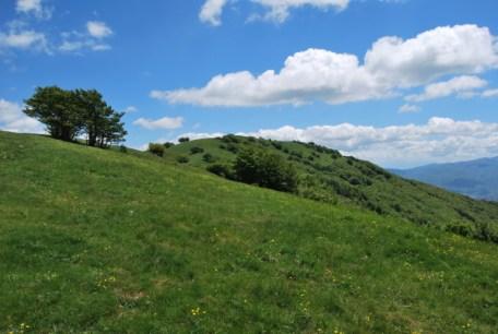 Cima del monte Pelpi dalla consta Agucchia escursione Trekkingtaroceno