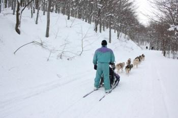 Sledding dog al Rifugio Monte Penna