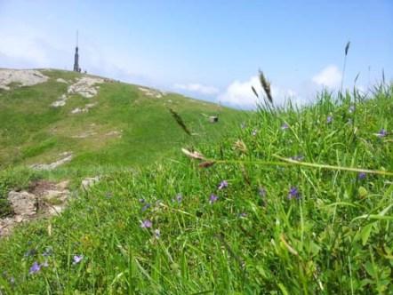 La vetta del Maggiorasca tra i fiori
