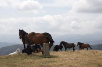 cavalli e cippo