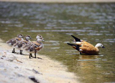 Nepal Bird Watch Tour