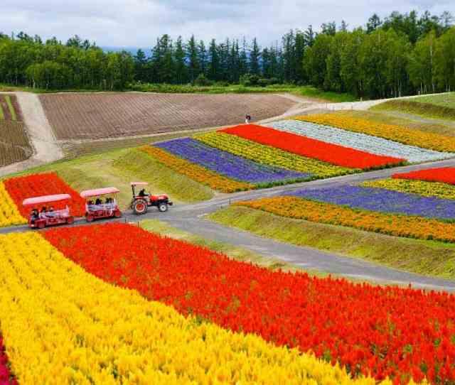 Flower Garden In Hokkaido Japan