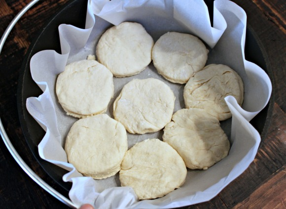 Single layer of biscuits