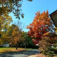 Autumn on Mom's Street