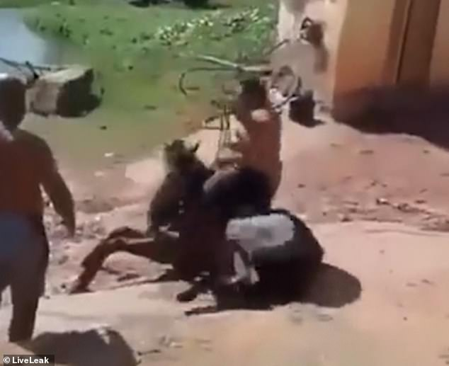 Onlookers laugh at the scene as they watch their friend struggle back onto his feet in the dirt